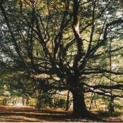 Mont gargan 1 2003 246ko
